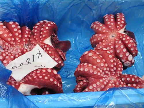 I love octopus