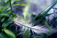 where wings can take you (Elena Bertolo) Tags: light bird nature grass leaves soft purple feather