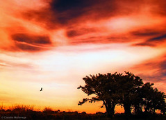"""Not everything that counts can be counted, and not everything that can be counted counts. "" (Claudio.Ar) Tags: trees light sunset red sky sun color luz nature beautiful birds dedication backlight clouds landscape searchthebest sony chapeau fields sensational topf100 legacy soe dsc campos pampa count h9 magnumopus blueribbonwinner beautifulshot creativephoto flickrsbest bej beautifulexpression fineartphotos gigashot abigfave worldbest anawesomeshot aplusphoto crystalaward flickrdiamond citrit overtheexcellence platinumheartaward goldsealofquality betterthangood sirhenryandco thesuperbmasterpiece photoexel alwaysexc claudioar claudiomufarrege goldenart reflectyourworld phvalue dragondaggerawards artofimages saariysqualitypictures specialspictures graphicmaster imagesforthelittleprince worldsartgallery absoluterouge redmatrix absolutelyperrrfect daarklands bestcapturesaoi oracosm oracope oracobb magicunicornverybest sailsevenseas coppercloudsilvernsun"