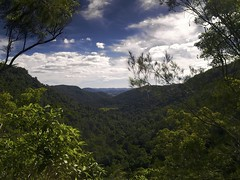 The Lost World (Erik K Veland) Tags: autumn panorama mountains cold tree forest landscape amazing australia olympus jungle nsw qld queensland vista e300 sunshinecoast hinterland 16mp vosplusbellesphotos