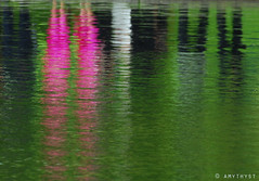 The Wedding Party (amythyst_lake) Tags: pink wedding lake reflection contest weddingphoto bostonpublicgarden bostoncom october2009