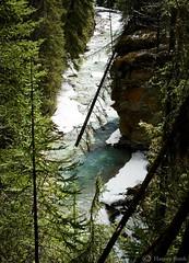 Johnston Canyon 16  9132 (Harvey Brink - Canadian Visuals) Tags: cliff canada tree ice river stream alberta spruce emerald banffnationalpark johnstoncanyon