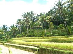 Terassierte Felder