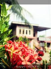 Rumahku Syurgaku (Murtadha Rafaai) Tags: home village malaysia kampung melayu rumah cantik kampungboy