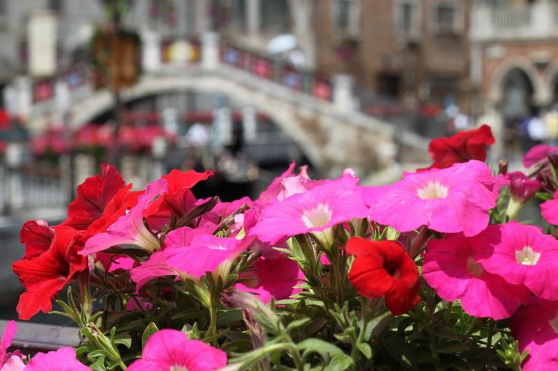 鮮やかに咲く花