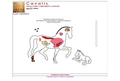Cavalis - Animation Flash