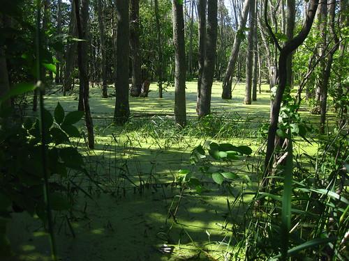 Swamps of Washtenaw County