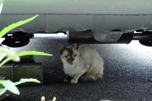 Today's Cat@20090630