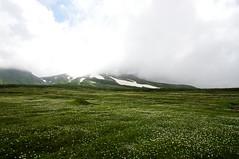 旭岳まで続く裾合平のお花畑