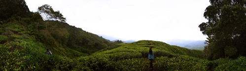 Hiking Gunung Cantik - Pano