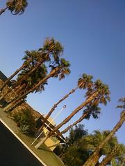 Walk on 8/9/2009 (The Frugal Dad) Tags: sun sand powerlines palmtrees oleander gravel