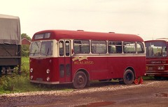 'Red Bus' - Albion Nimbus. (Renown) Tags: buses nimbus somerset devon coaches albion redbus honiton devongeneral singledecker midibus xta839 independentbuses