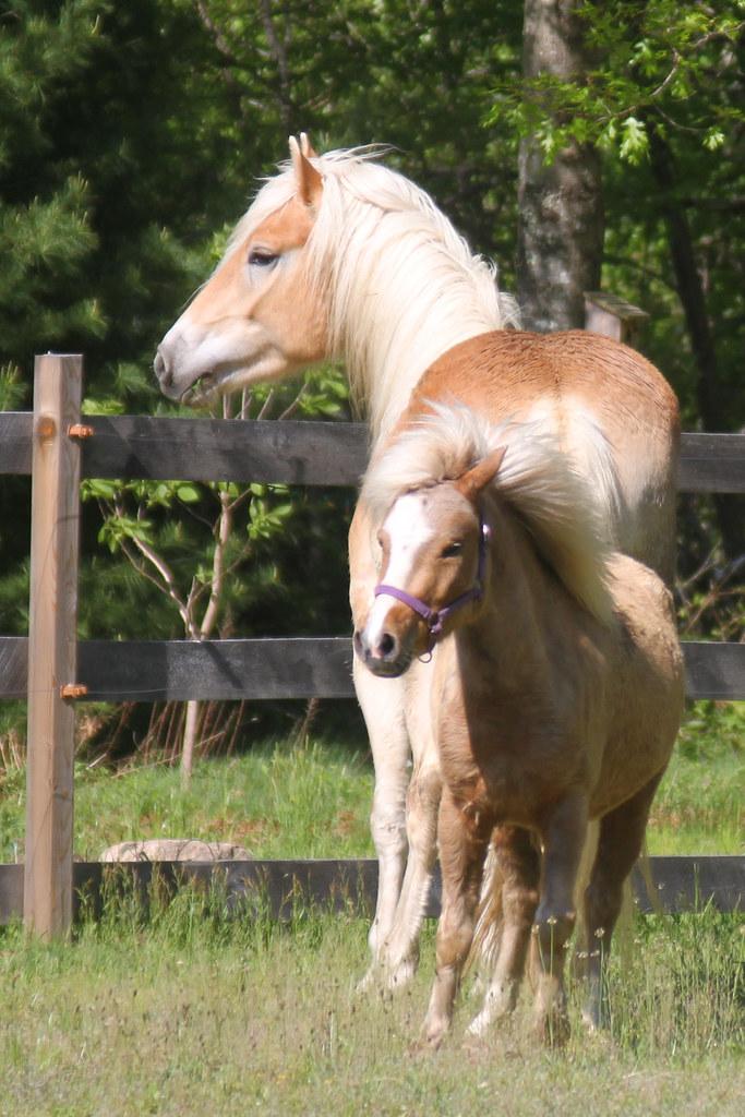 horses 207x