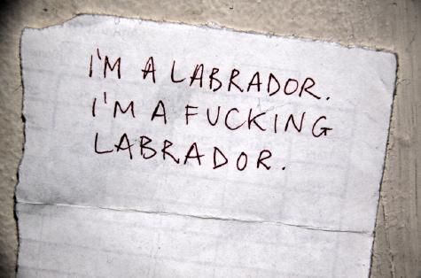 I'M A LABRADOR. I'M A FUCKING LABRADOR.