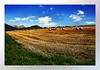 Landscape (Hamad Al-meer) Tags: blue sky tree green nature yellow canon landscape eos europe hd hamad 30d حمد المانيا طبيعة almeer أوروبا اوروبا المير colourartaward hamadhd فرانكفورت hamadhdcom wwwhamadhdcom