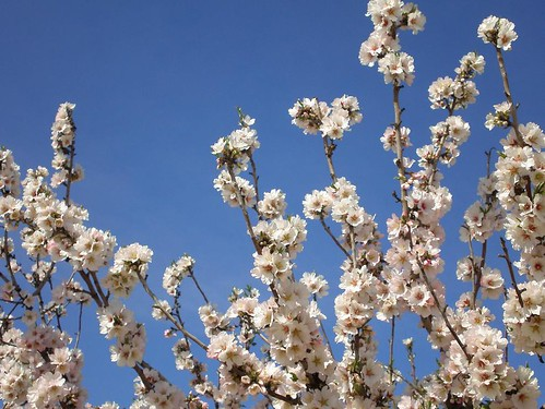Primavera en la Huerta 03