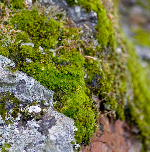 Mosses and Lichen on Rocks