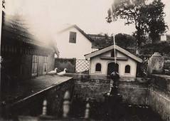 Estanque Icod 1926