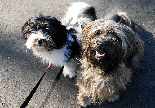 Happy Pups