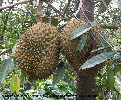 Durian, nog aan de boom, Bali