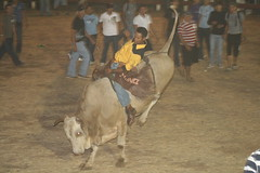 Competition Bull Riding