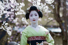 Under cherry blossoms '09 #2 (Onihide) Tags: cherry blossoms maiko gionkobu mamehana