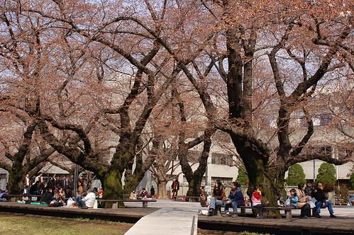 Ookayama Campus of Tokyo Tech