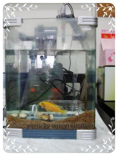 你拍攝的 lab小黃魚。會玩耍!。