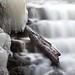 Tyler Falls Photo 5