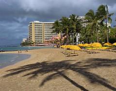 Palms Shade (RUSSIANTEXAN) Tags: vacation beach fun hawaii amazing nikon searchthebest waikiki resort honolulu 2009 soe russiantexan supershot fineartphotos platinumphoto d700 memoriesbook artofimages anvarkhodzhaev russiantexas svetan svetanphotography