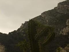 monaco exotic garden (deodorel) Tags: monaco exoticgarden