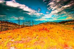 near Chute Lake Rd (eriks_garden) Tags: trees summer canada nature landscape fire landscapes bc britishcolumbia okanagan lakes burn bu