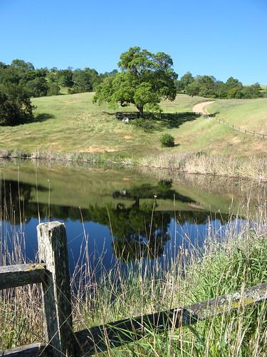 Los Cerritos Pond