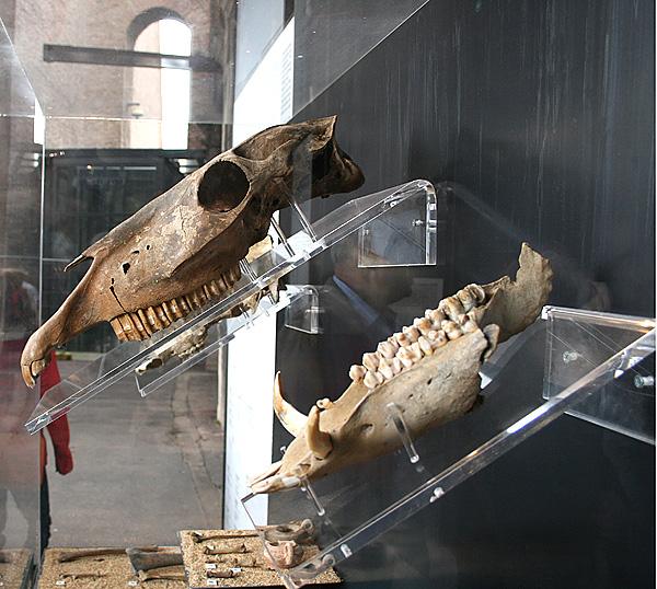 rom-skelett