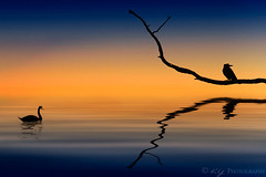Harmony (KY-Photography) Tags: ca sunset ontario canada reflection tree bird art nature water photoshop design swan artwork branch flood ky nowhere guelph brush creation harmony gradient plugin layers khalid allrightsreserved kal karmapotd karmapotw kyphotography