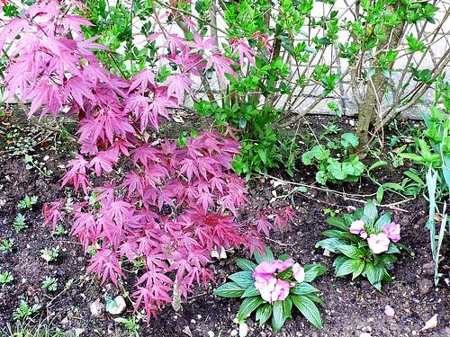 Garden April 2009