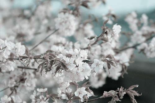 Spring (Frozen)