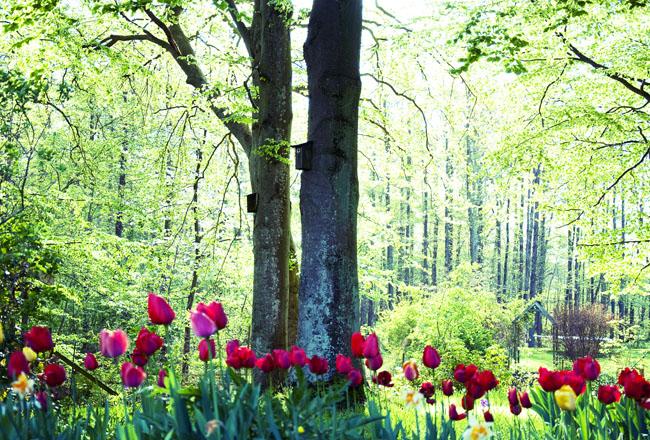 jannes garden