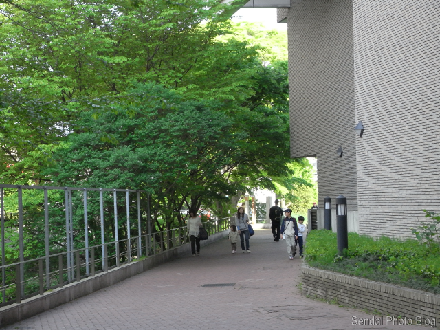 sendai walk home