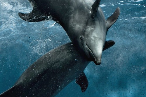 Dolphin affection