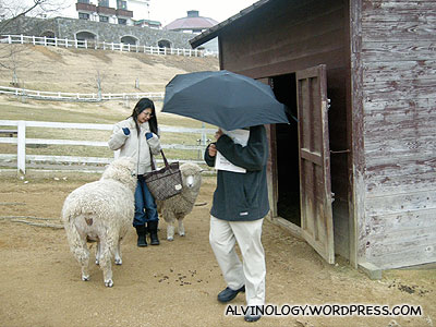 Meiyen playing catching with the sheep