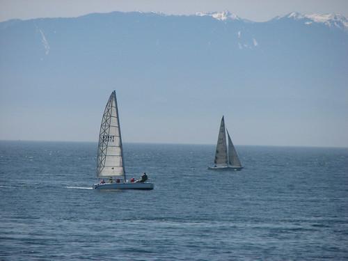 sailboat sailing victoria