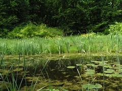 (niebieskaa) Tags: trees green nature water poland polska polen zielony woda drzewa ostromecko thebp