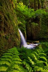 Columbia River Gorge (Jesse Estes) Tags: moss stream ferns eaglecreek jesseestesphotography