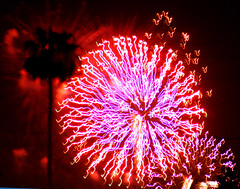 Glory, with Palm Tree (cobalt123) Tags: light arizona abstract phoenix night composition contrast fireworks glory highcontrast palm celebration palmtree burst july4th celebrate continuous canon40d tamron28200mmlens july42009