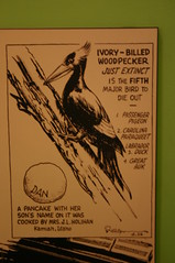 Ripley's Cartoon - Ivory Billed Woodpecker