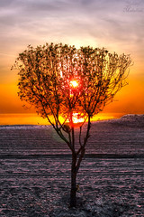 Tree dawn (Yousef Malallah) Tags: people color tree beautiful wow wonderful dawn amazing cool day very good sony great oops hd kuwait tones flikr tone hdr  ops  yousef         a700     anawesomeshot malallah  bestofmywinners mygearandme