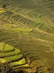 Nepal (nepalbaba) Tags: travel nepal verde green yellow giallo fields viaggio ohhh campi digitalcameraclub ourplanet excapture earthasia oneofmypics nepalbaba agrocoltura