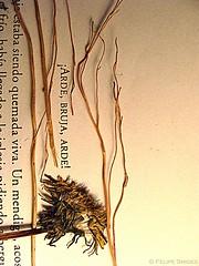 Sincera_mente. (Felipe Smides) Tags: chile flowers woman flores macro art texture textura girl fire arte burn fuego seca felipe texturas sed sincera bruja jodorowsky arde sinceridad secas fábula artisticexpression arder quema sinceramente alejandrojodorowsky instantfave mywinners abigfave aplusphoto beatifulcapture artlegacy smides fotografiasmides funfanphotos felipesmides