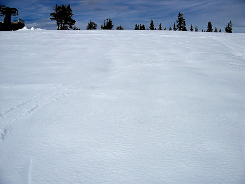 Fresh tracks through powder